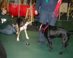 Downriver Dogs Obedience Training